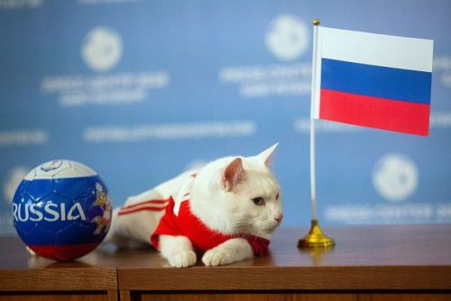 Oracle cat Achilles predicts Russia victory in 2018 FIFA World Cup opening match