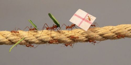 Leaf cutter ants predict England outcome