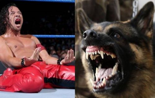 Shinsuke Nakamura seems to be well on the road to recovery after his dog bite incident