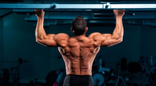The back is one of the major muscle groups of the human body