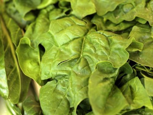 Spinach is a rich source of Iron