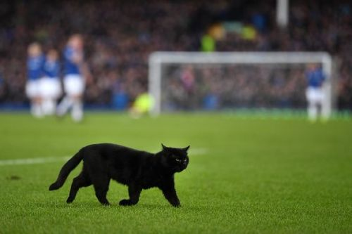 A cat appears halfway through Everton's clash with Wolves