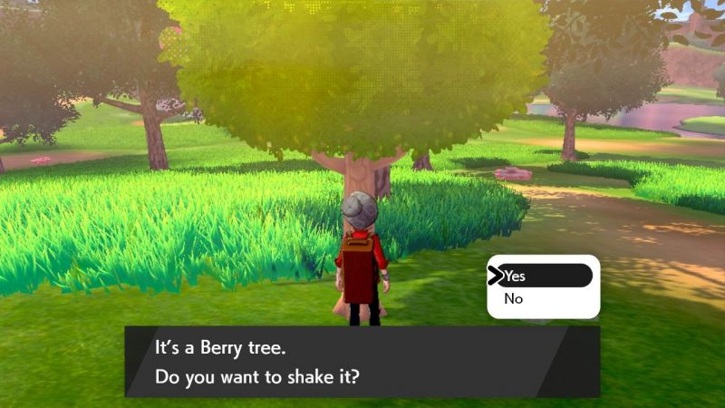 Image result for pokemon sword and shield berries