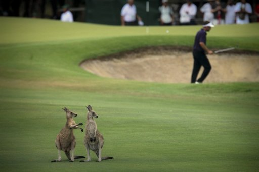 The Australian PGA Championship, which starts on Thursday, has been hosted at Coolum since 2002
