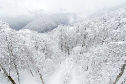 Snow-covered trees and mountains above Rosa Khutor, one of the 2014 Winter Olympic venues, in Sochi on February 19, 2013