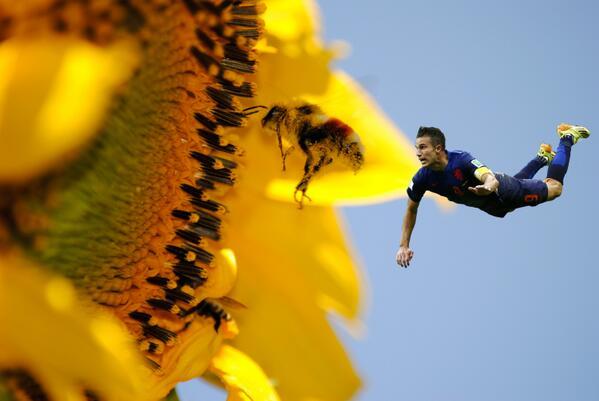 Van Persie doing his bit for Honey bees and Flower Pollination