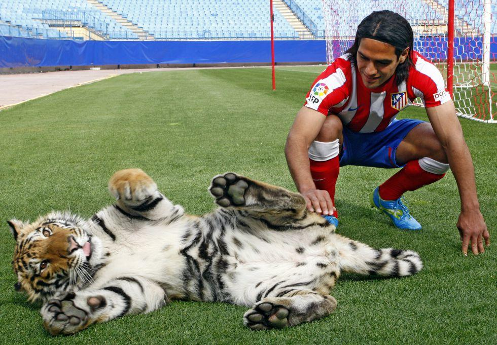 Video: Radamel 'El Tigre' Falcao meets a Royal Bengal Tiger